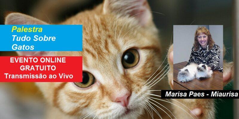 Palestra Online Gratuita Tudo Sobre Gatos – Miaurisa – Transmissão ao Vivo
