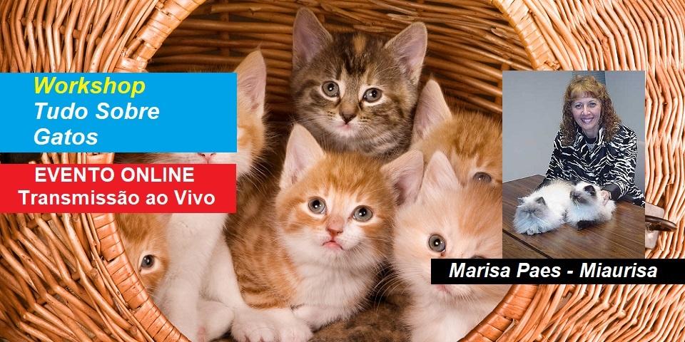 Workshop Online Tudo Sobre Gatos